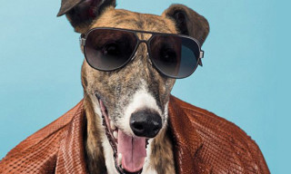 Trussardi's Greyhound is the Star of its Spring/Summer 2014 Advertising Campaign