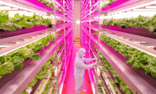 Take a Look Inside One of the World's Largest All-LED Indoor Farms
