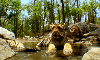 Watch BBC Wildlife Director John Downer Reveal the Incredible Tricks of Documentary Filmmaking