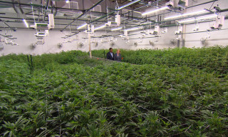 Watch '60 Minutes' Explore the Legalized Marijuana Business in Colorado
