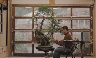 "Watch ""American Shokunin,"" the Delicate Art of Bonsai"
