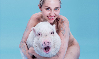 Miley Cyrus Poses Nude With a Pig on the Cover of 'PAPERMAG'