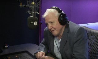 "Sir David Attenborough Narrates Adele's ""Hello"" Music Video Like a Nature Show"