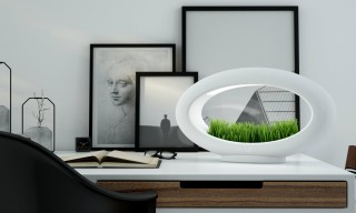 Liven up Your Office With This Modern Desktop Garden