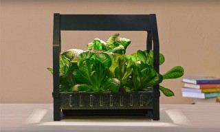IKEA Launches Indoor Garden That Can Grow Food All Year-Round