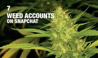 7 Weed Accounts You Should Be Following on Snapchat Right Now