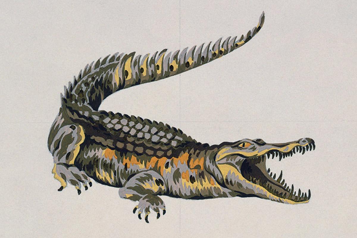 Crocodile tears the logo battle between lacoste izod for Coccodrillo lacoste