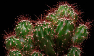 The Second Episode of 'Why It's Cool' Explores Why Cacti Are Having a Pop-Culture Moment