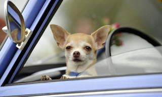"""Tesla's New """"Dog Mode"""" Reassures Passersby That Your Dog Is Okay"""