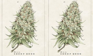 Tricia Kleinot's Snoop Dogg Poster Hemp Edition