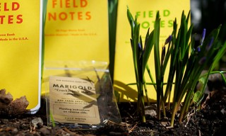 Field Notes Sunshine Special Edition 3 Pack with Marigold Seeds