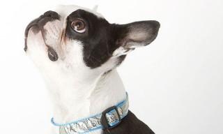 Shipley & Halmos – Dog Collars