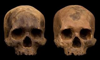 Chocolate Skulls by Marina Malvada – Cannibal Friendly