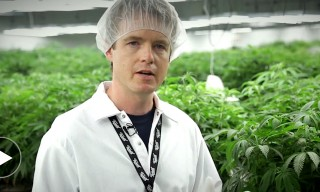 Inside Tweed Cannabis Factory with the New York Times