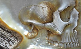 Beautiful Mother of Pearl Shell Skull Carvings by Gregory Halili